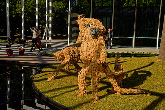 Ape-like creatures made from plants and wire greet visitors to the Calyx at the Sydney Royal Botanic Garden