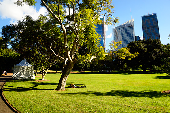 The Sydney Royal Botanic Gardens and its sweeping lawns