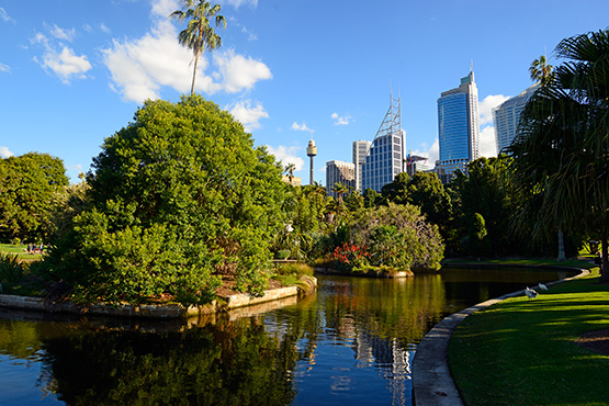 A lagoon with island sanctuaries for nesting birds at the Sydney Royal Botanic Garden