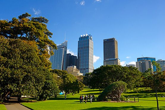 Looking from the harbour foreshores up the hill to the top of the Sydney Royal Botanic Garden