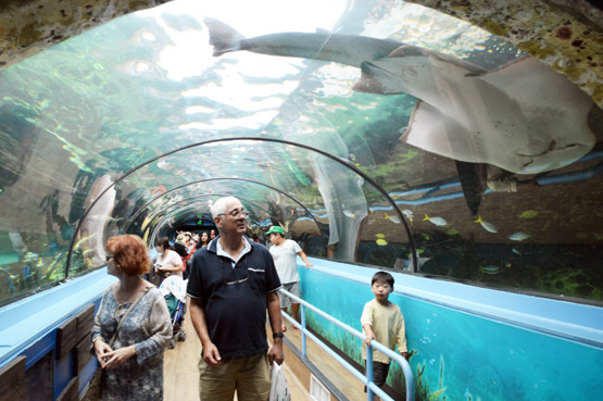 A large ray glides across the domes of the Sea Life Sydney Aquarium's glass tunnels.