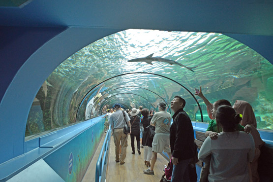 Inside glass tunnels at Sea Lfe Sydney Aquarium